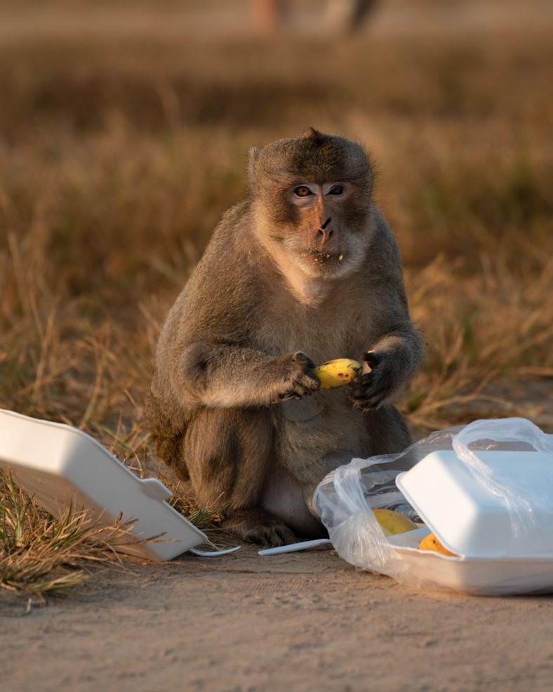 Monkey at Angkor Wat - witandfolly.co