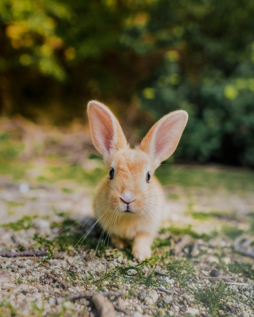 Bunny on bunny island japan - witandfolly.co