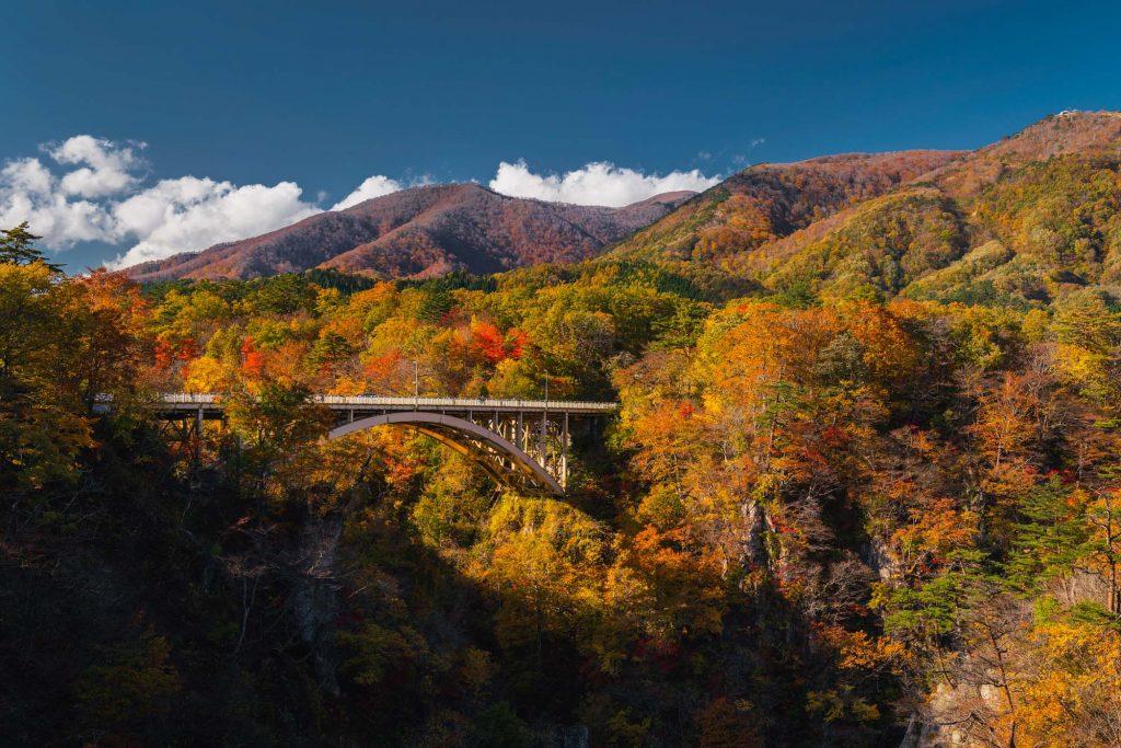 image of a bridge amidst fall colors