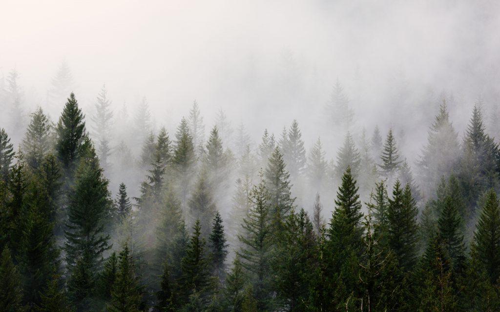 pacific-northwest-trees