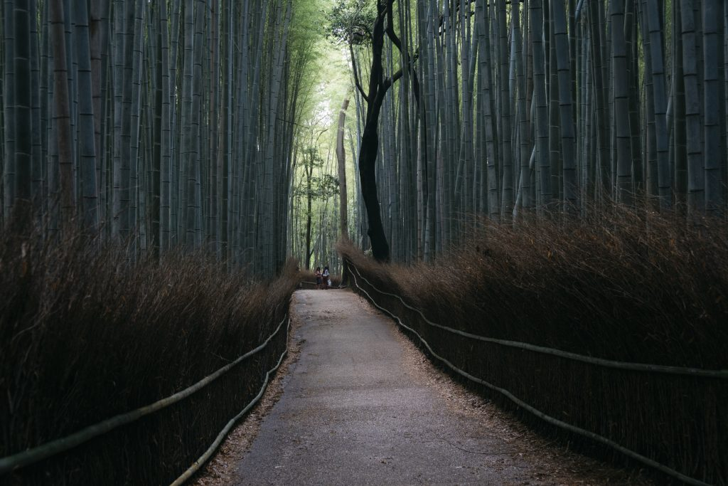 picture of arashiyama bamboo forest in landscape perspective