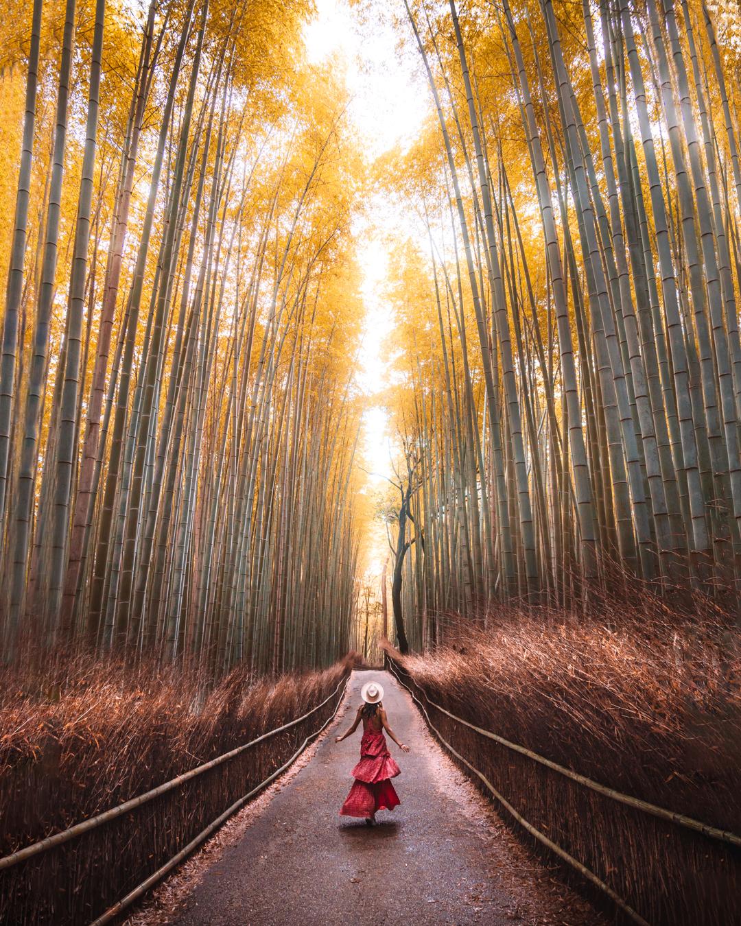 Girl in bamboo grove