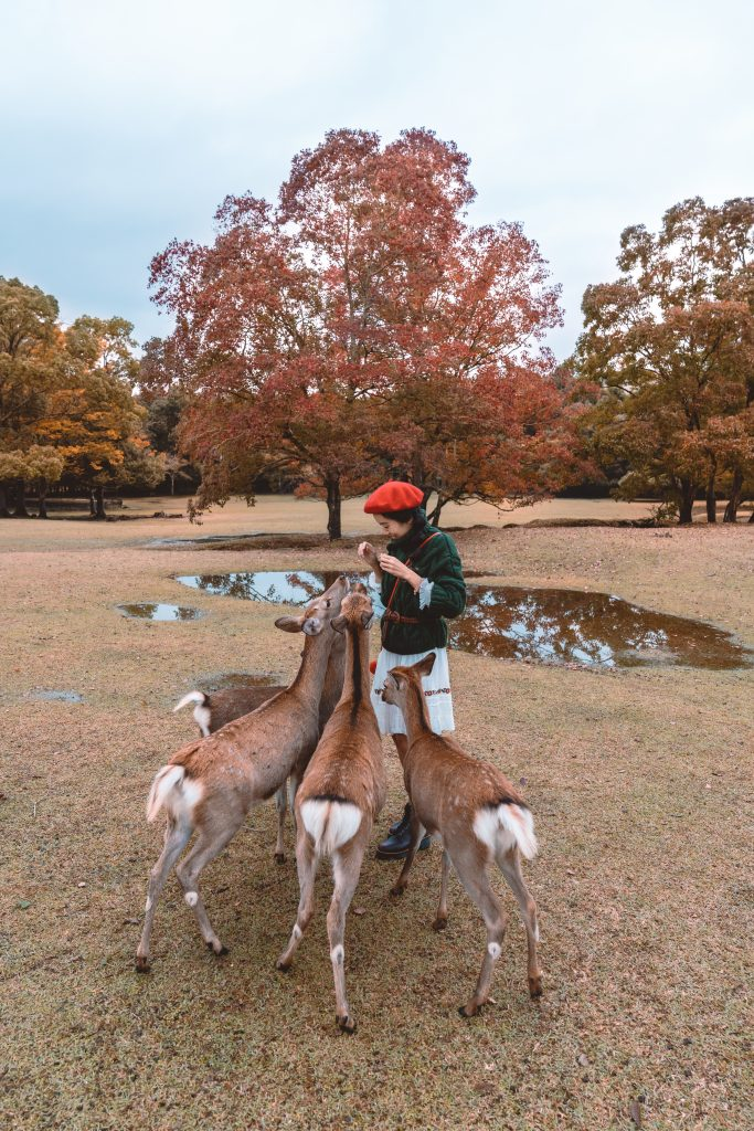 girl feeding deer in Nara park