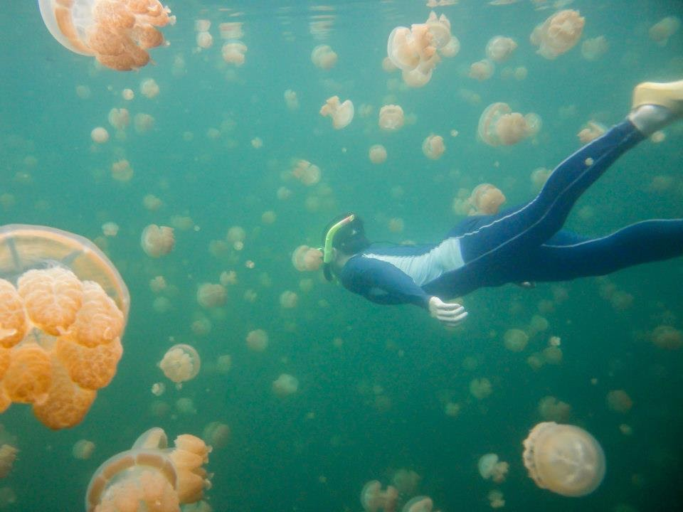 image of a person snorkeling with jelly fish