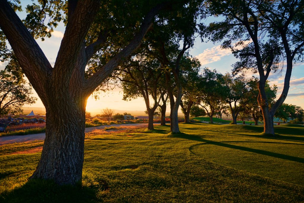 photo of trees at sunset on a golf course