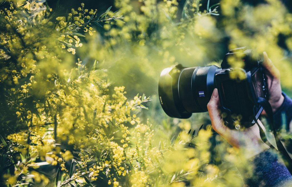 camera in yellow flowers