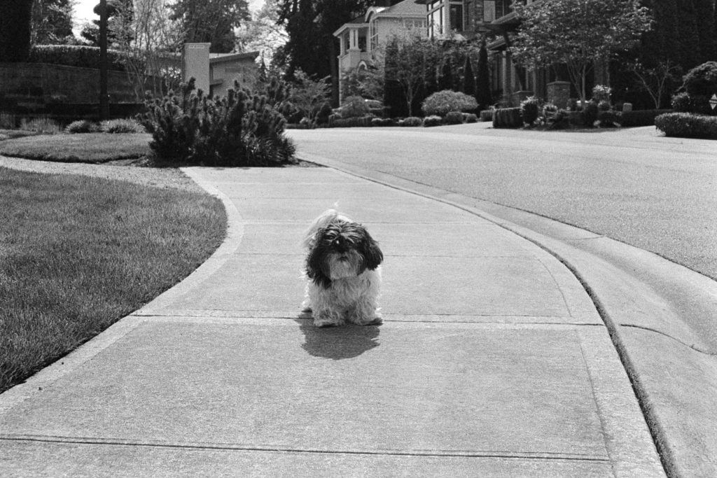 image of dog in black and white