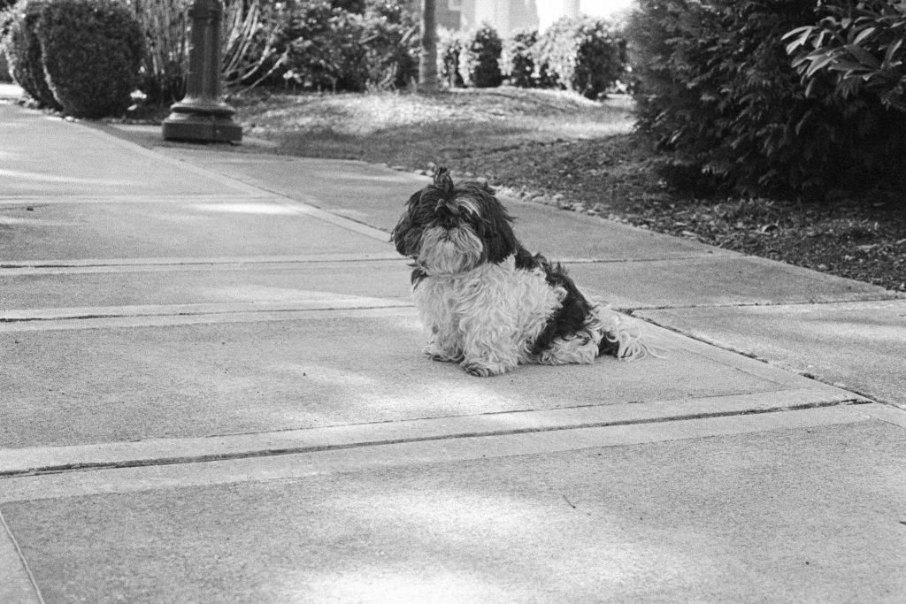 image of dog on sidewalk