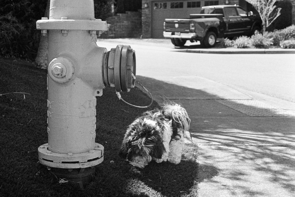 image of dog near fire hydrant in black and white