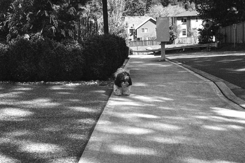 image of dog on the sidewalk in black and white