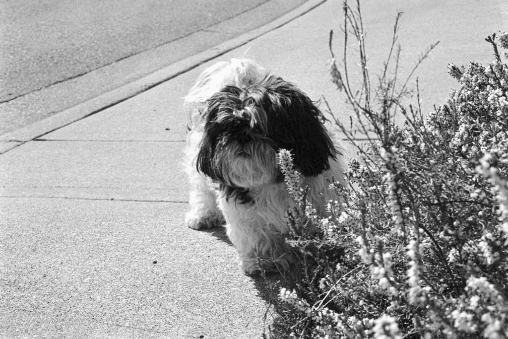 image of dog near plants in black and white
