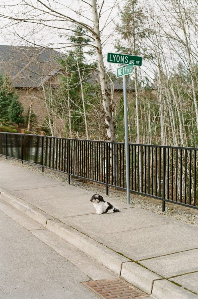 dog in front of street sign