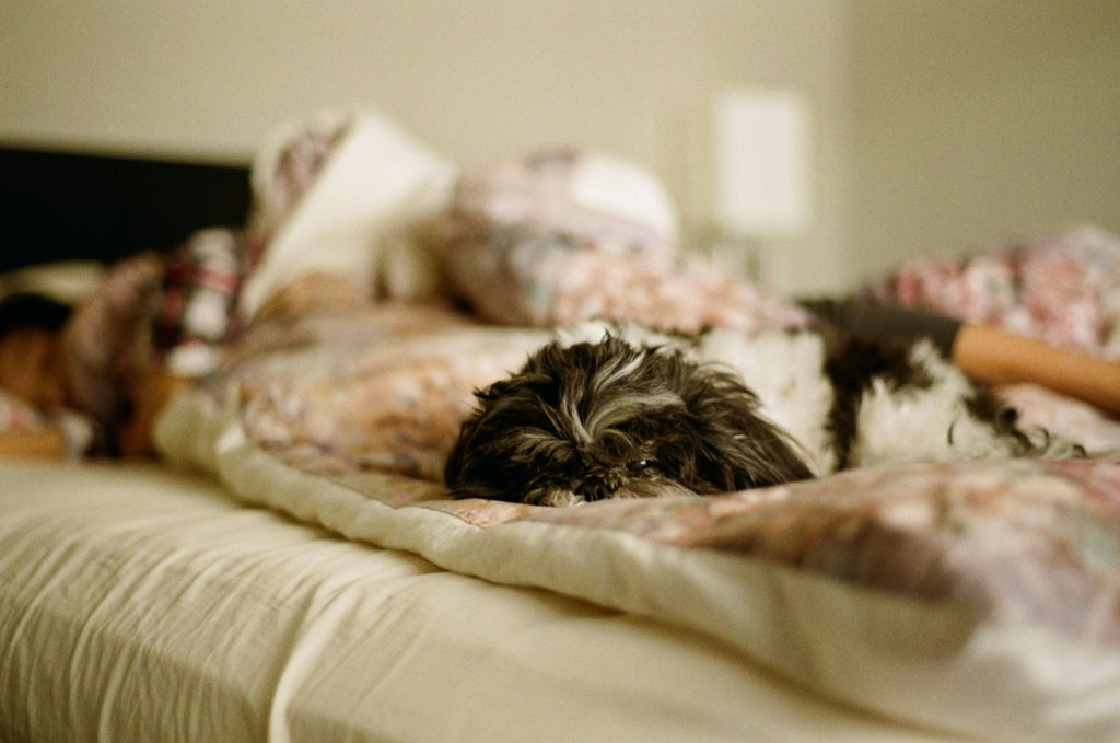 image of dog in bed