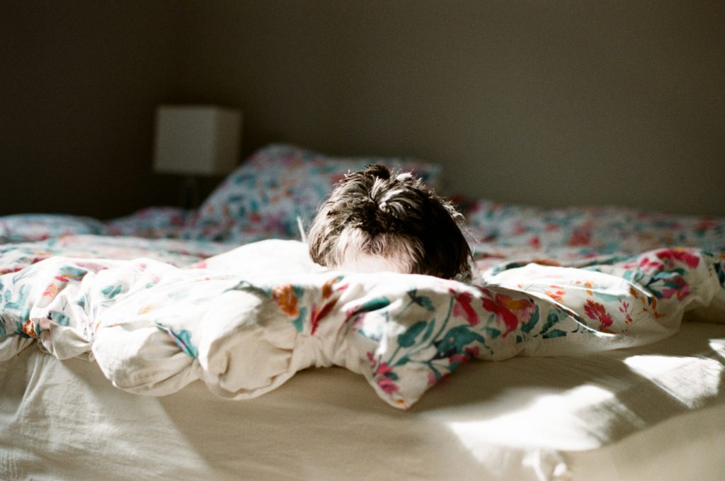 image of a dog in a bed with kodak colorplus 200