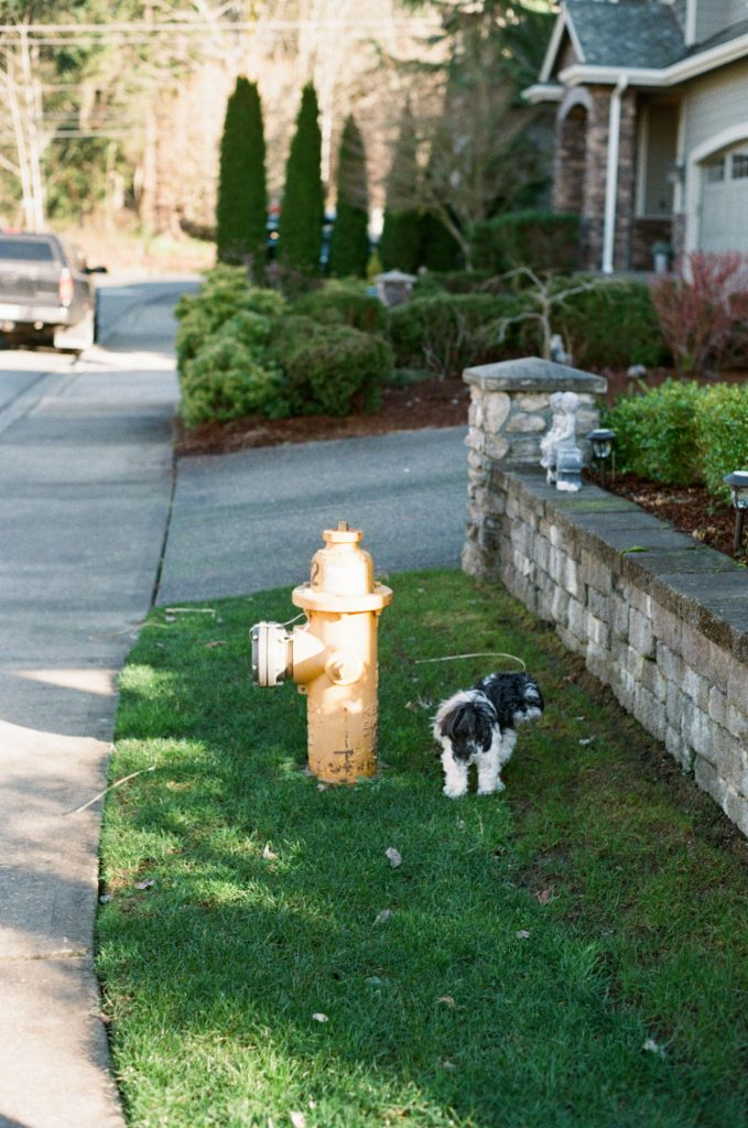 dog in front of fire hydrant