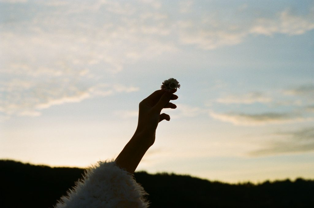 silhouette of hand and flower