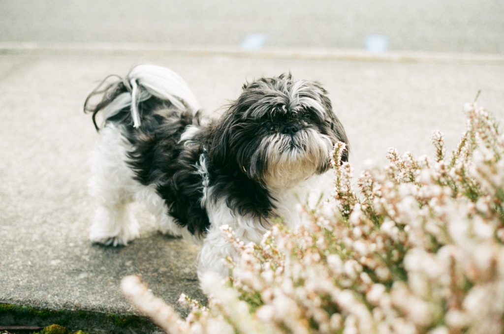 image of dog in front of flowers