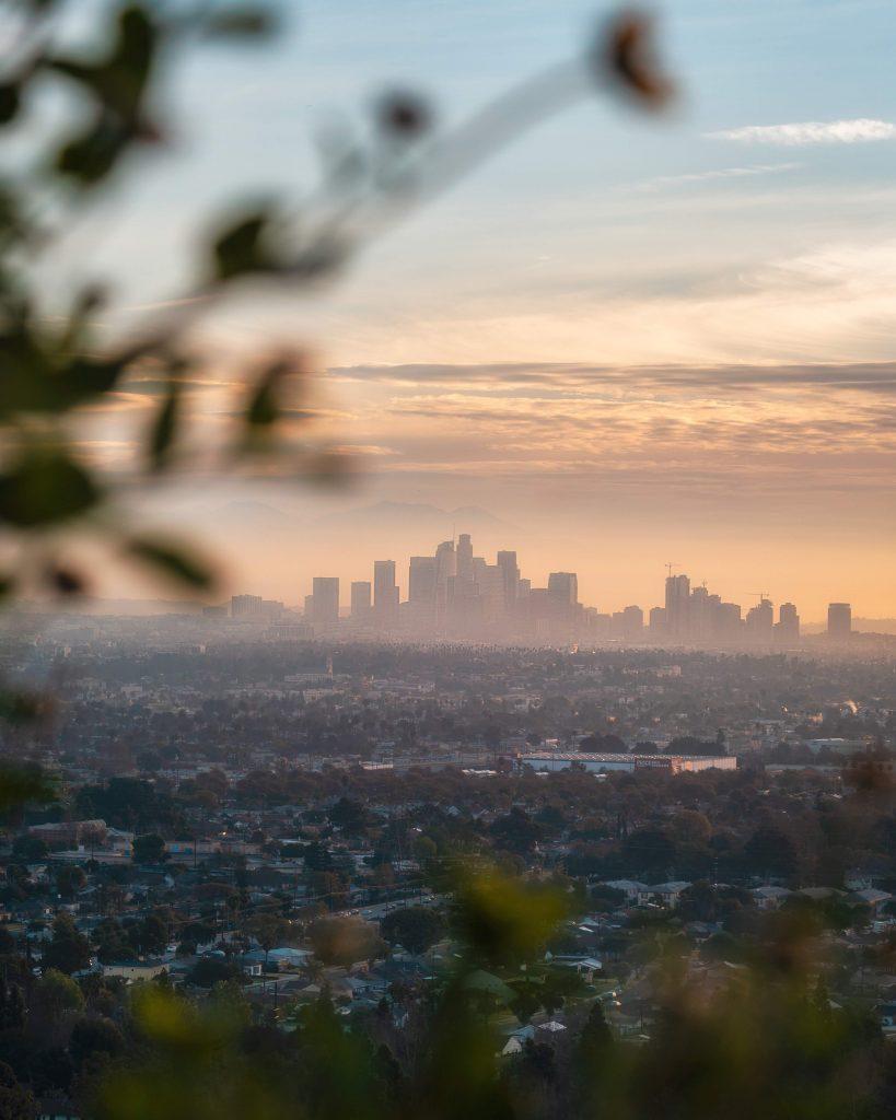 image of LA skyline framed by flowers