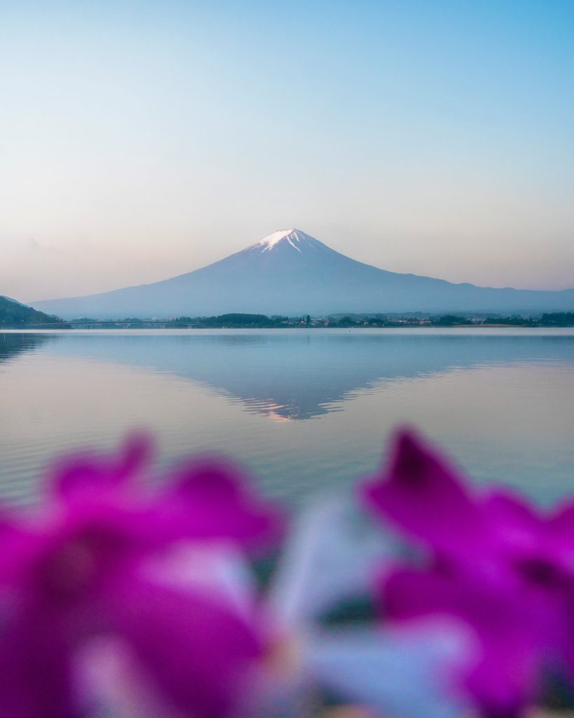 image of mount fuji and reflection with flowers in foreground