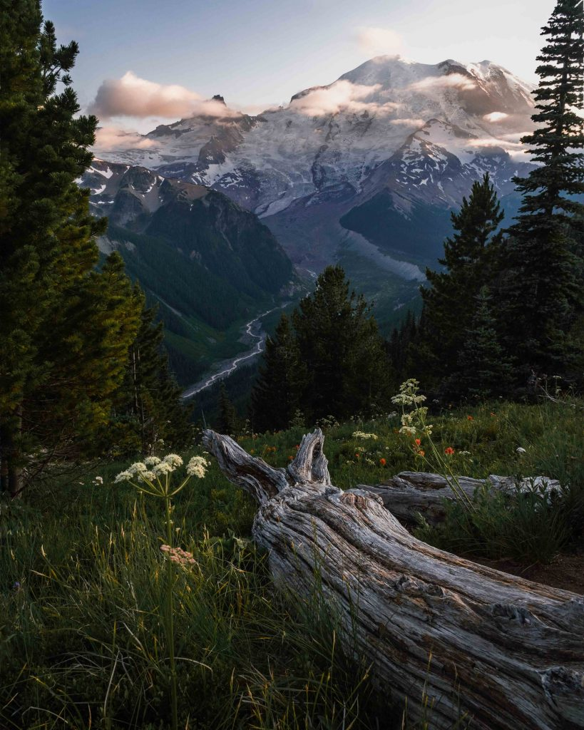 image of mount rainier with log