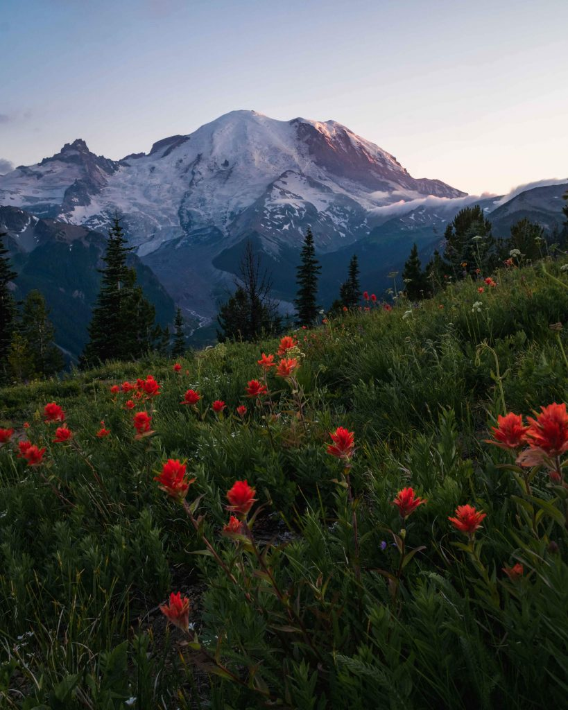 image of mount rainier with wild flowers in the foreground