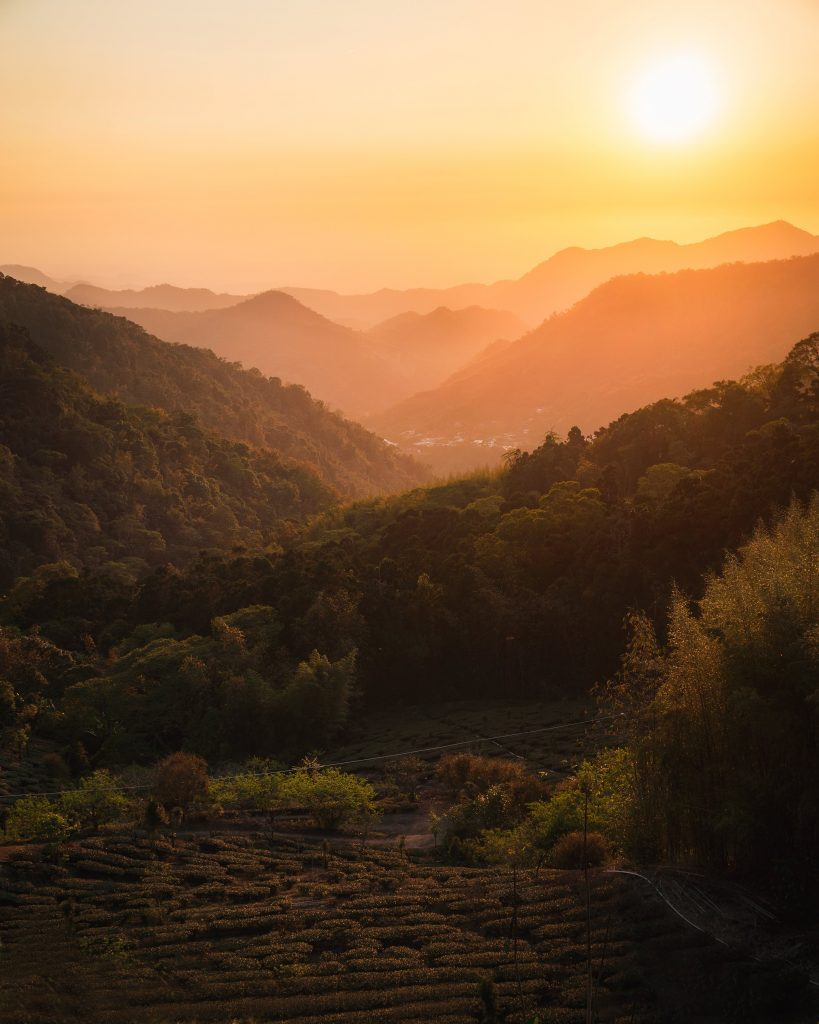 image of sunset over tea fields in taiwan