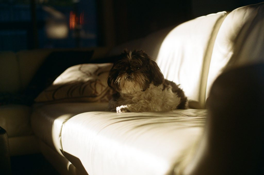 image of dog on a couch with shadows