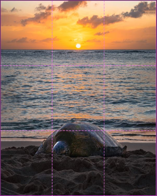 image of a sea turtle at sunset with rule of thirds grid overlayed
