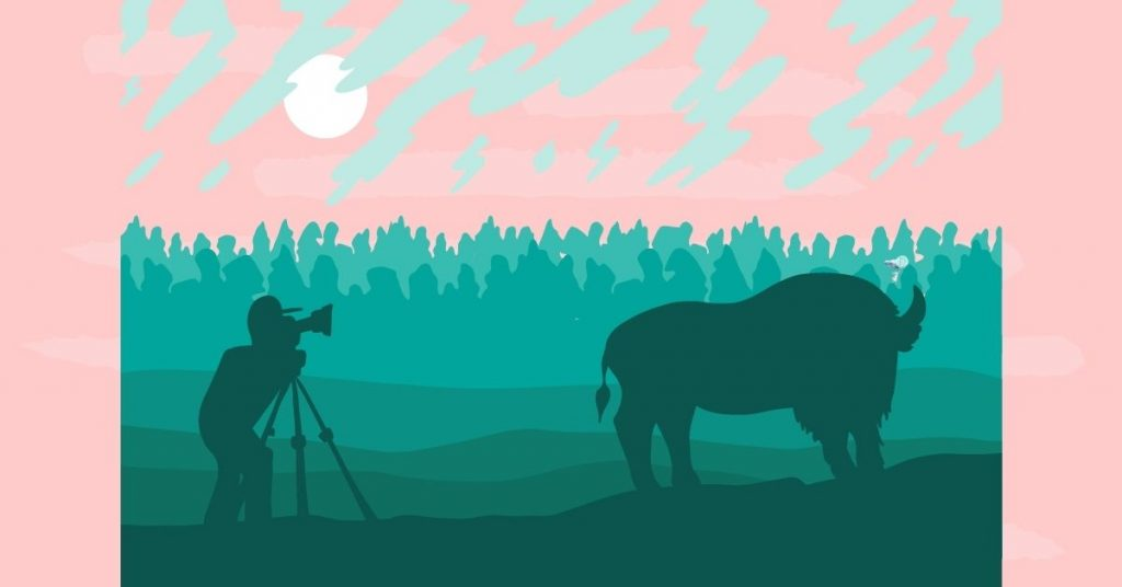 illustration of a photographer taking a photo of a bison