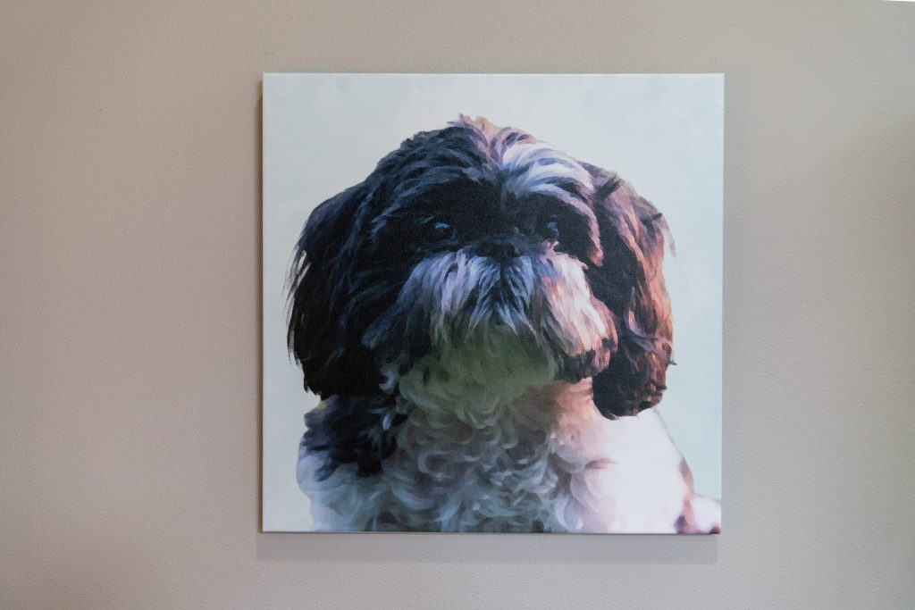 image of canvaspop pet portrait at home
