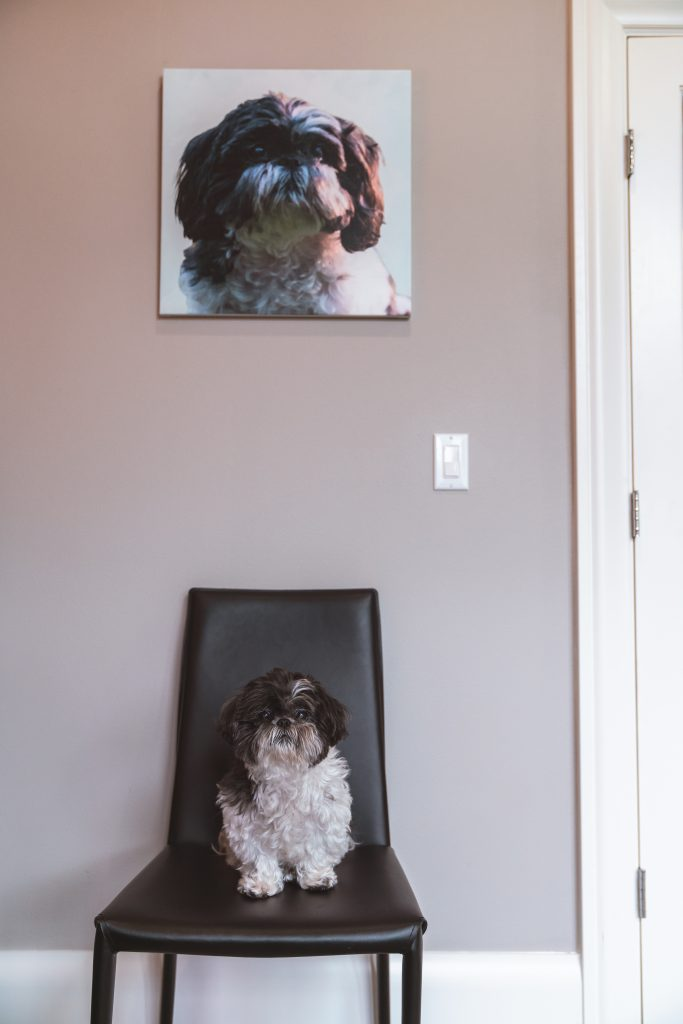 image of dog in front of her pet portrait