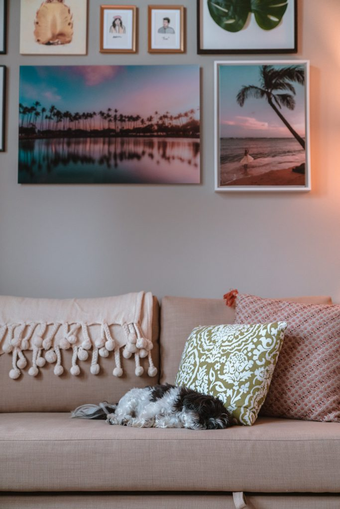 shih tzu dog sleeping on couch
