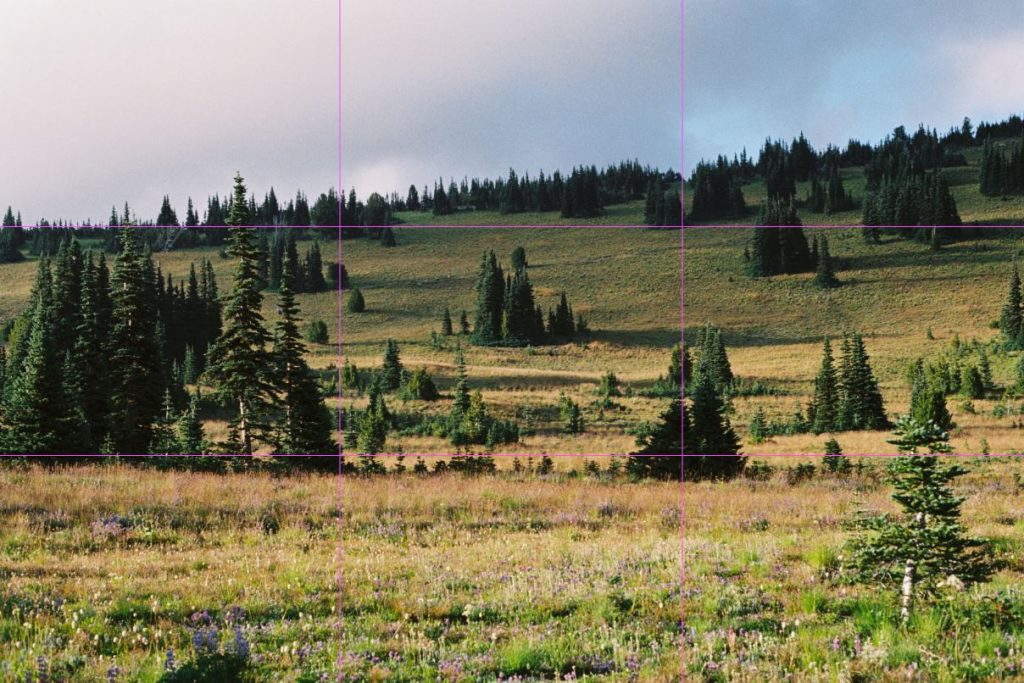 image of trees in mount rainier national park with rule of third grid