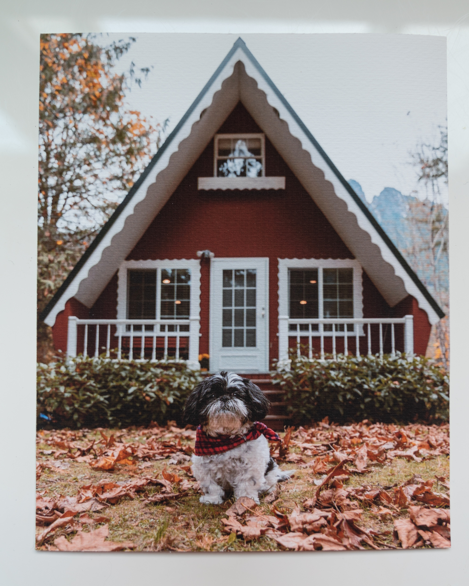 Photo of shih tzu in front of a red A-frame cabin on Printique's giclee paper