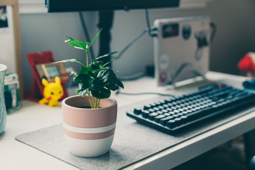 image of coffee plant on desk