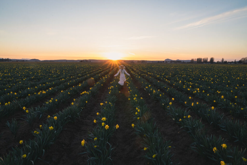 girl in white dress in a daffodil field at sunset with a sun burst