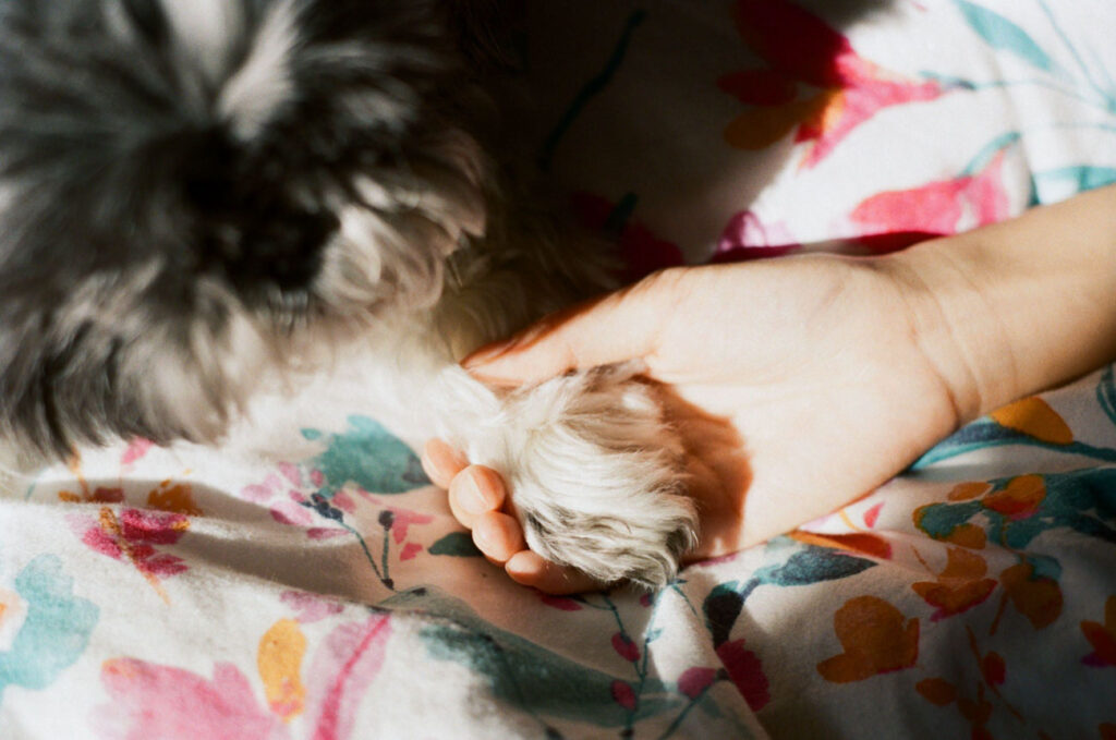 image of a person holding the paws of a dog