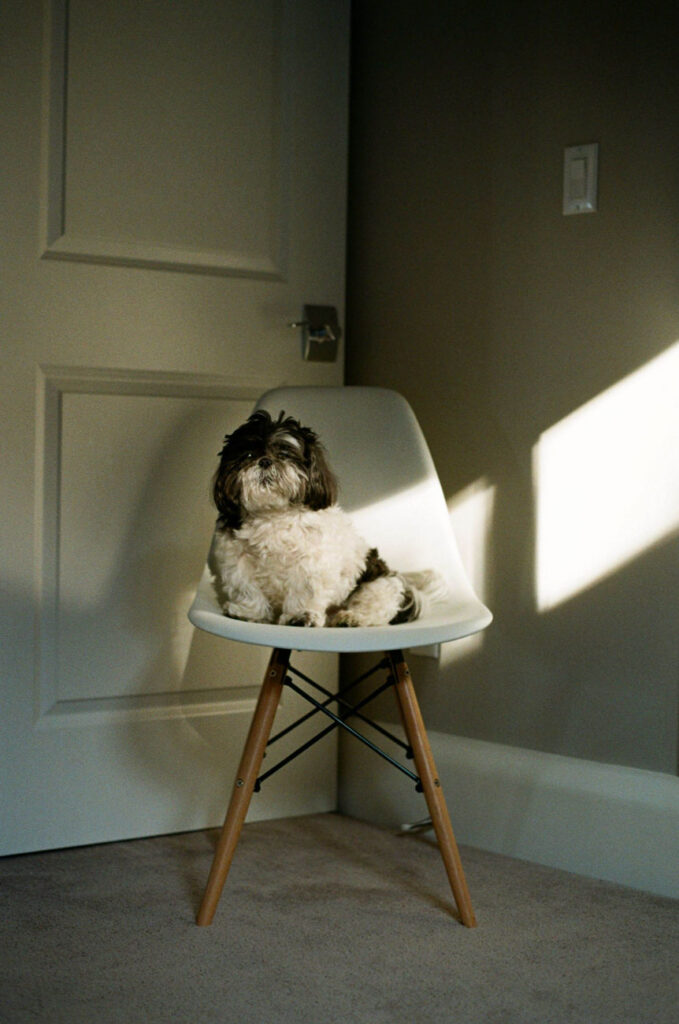 image of a dog on a white chair in shadow and sunlight