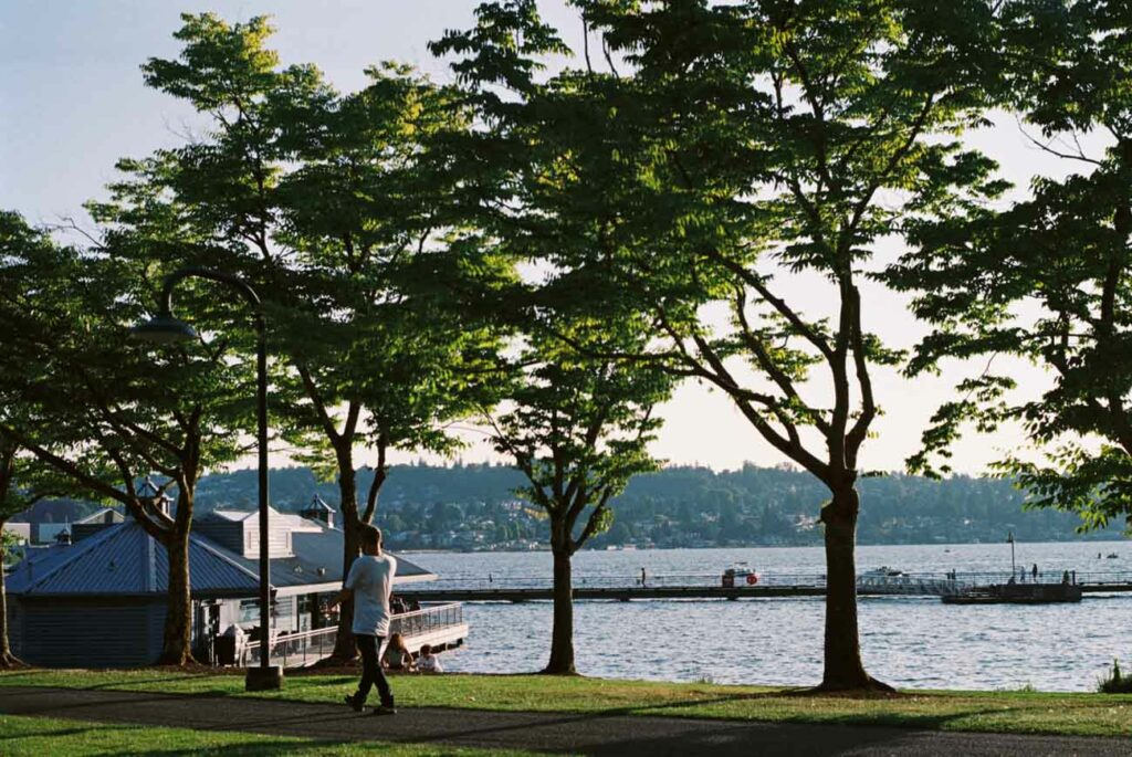 image of a lake with trees