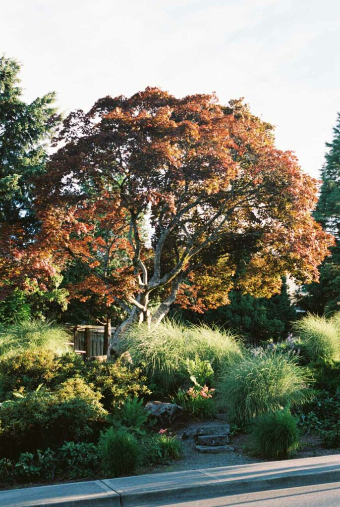 image of a tree with orange leaves in sunlight