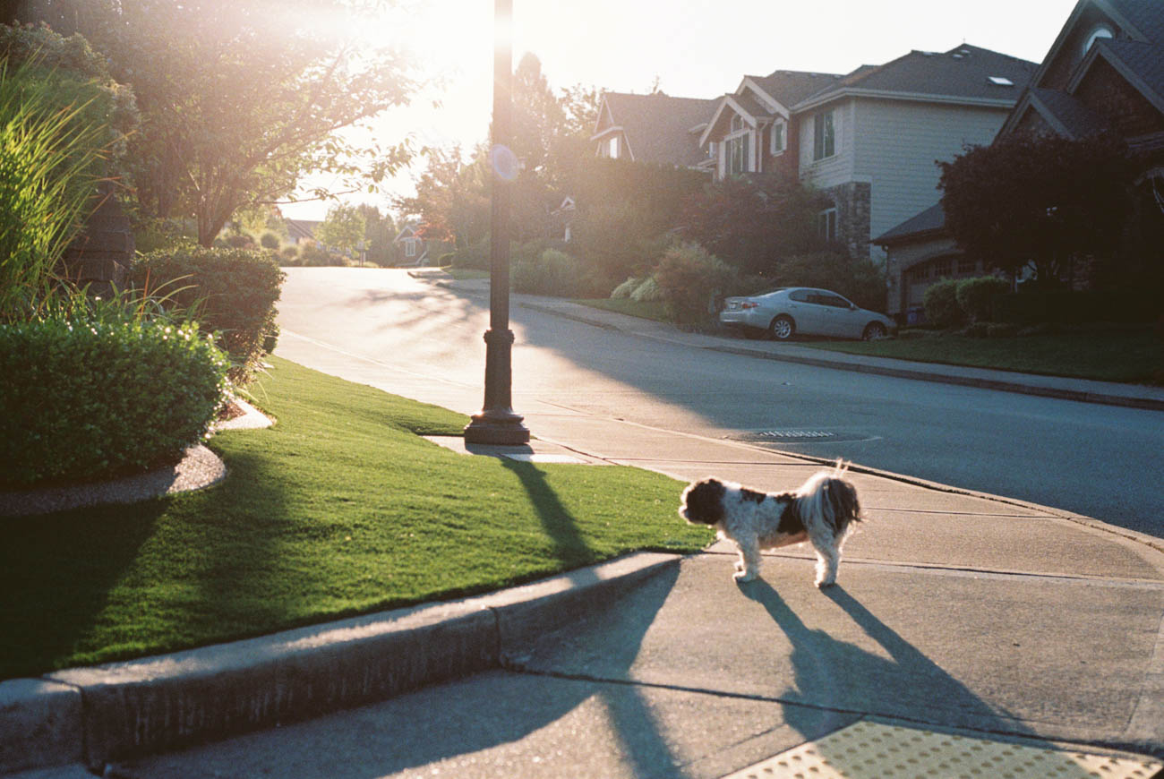 image of dog on the side walk during sunset