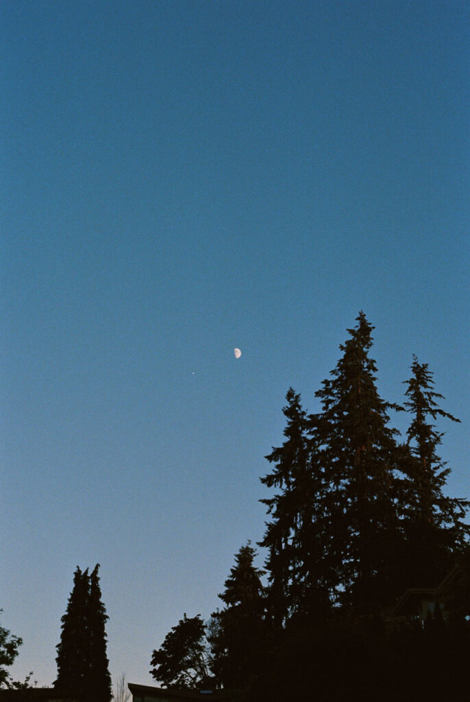 image of the moon with pine tree in the foreground