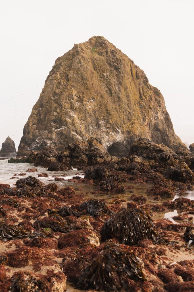 image of marine gardens in front of haystack rock cannon beach